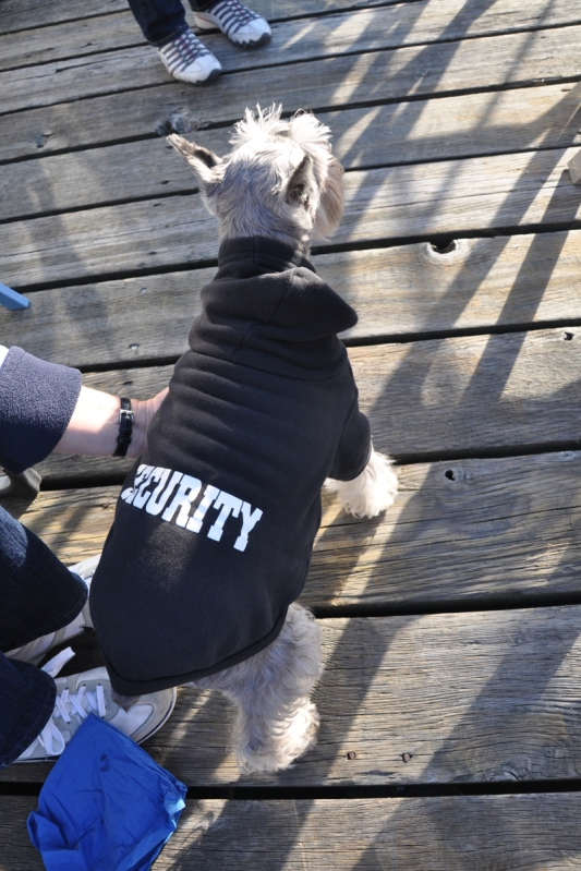 Scooby Security Dog