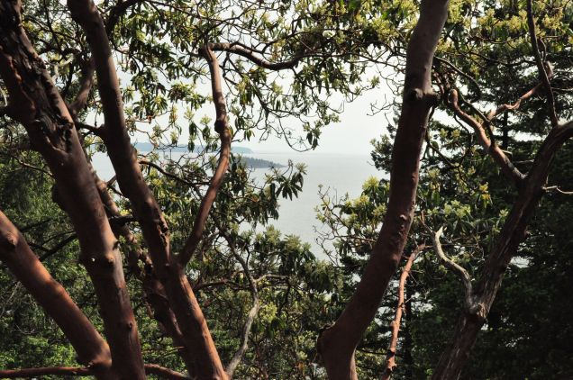 View to Passage Island through the Arbutus trees at the top of Dorman Point Bowen Island