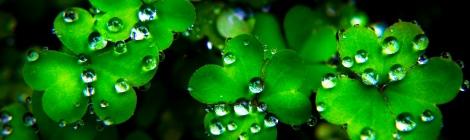 A Little Clover, A Little Luck o' the Irish